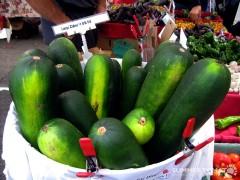 Huge Zucchini