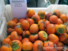 First Chocolate Persimmons