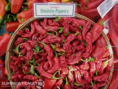 Red Japanese Shishito Peppers