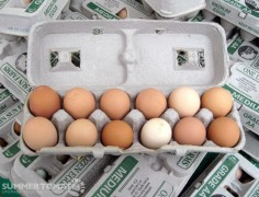 Marin Sun Farms Eggs