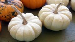 White Mini Pumpkins