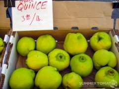 Organic Quince