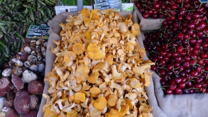 Chanterelles Mushrooms