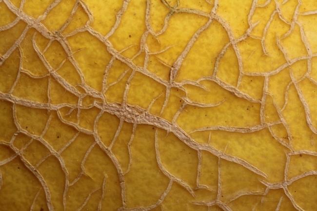 melon skin