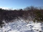 Bear Mountain Winter-009
