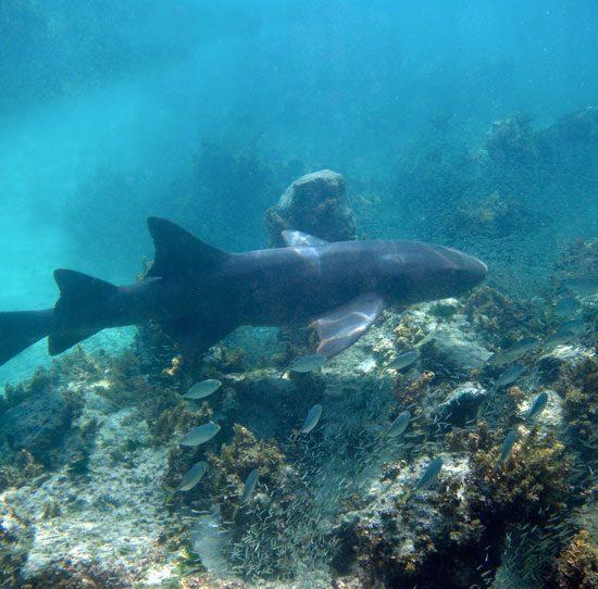 DIP-shark-550×542