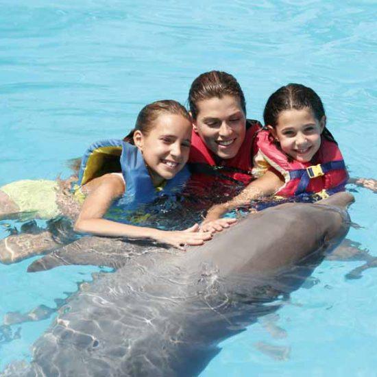 DIP-trio-dolphin-550×550