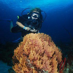Diving Activities