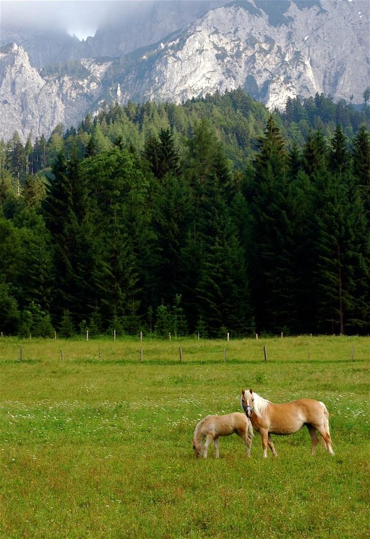 Classic Austrian countryside near Kalkalpen National Park.