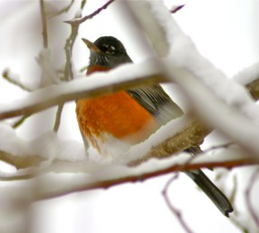 Spring birds face some challenges in the Colorado high country.