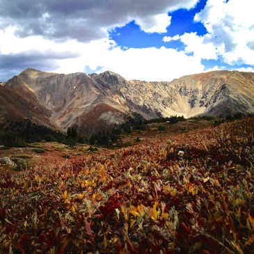 Tundra color near Loveland Pass.