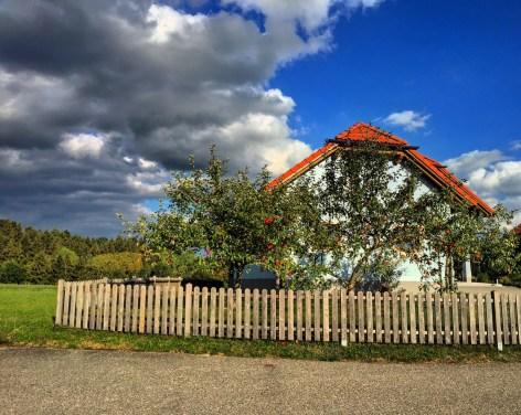Farmyard apple tree, Upper Austria.