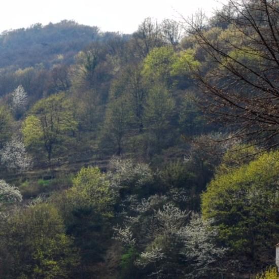 Wachau hillside