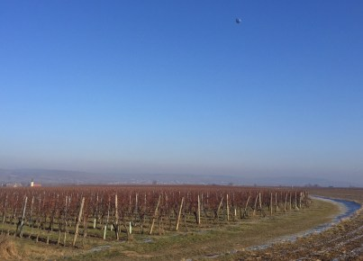 New Years Day in the wine country of Lower Austria.
