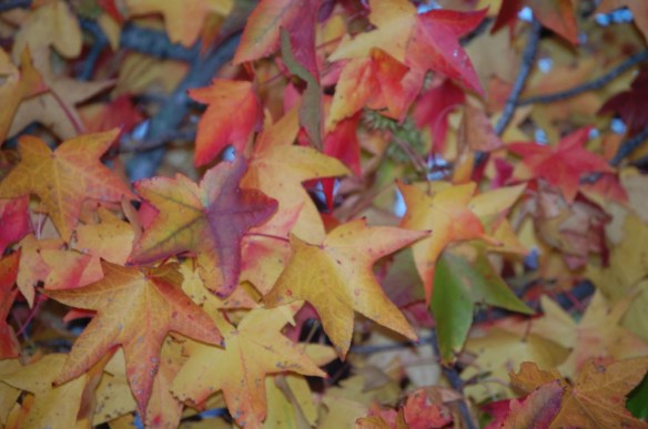 More Colors of leaves