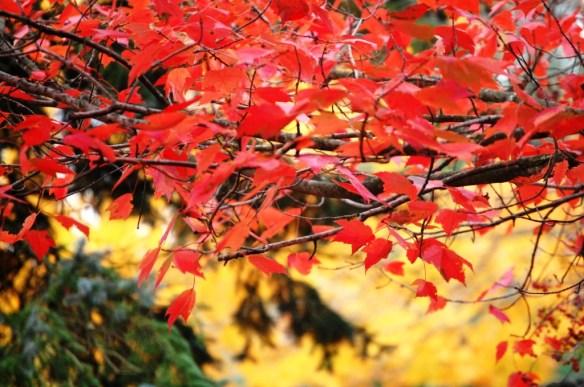 Fall Colors in Lexington, KY