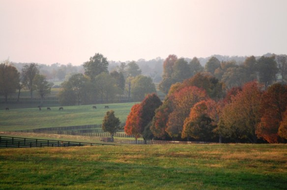 Horse farm country in the fall