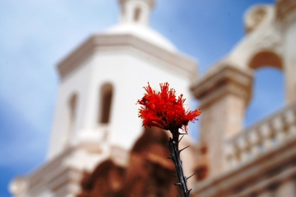 I took this cactus blossom at San Xavier del Bac in Tucson