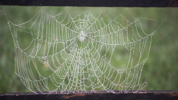 Spider Web in Spring