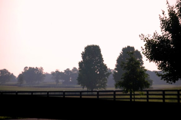 Misty morning in horse farm country