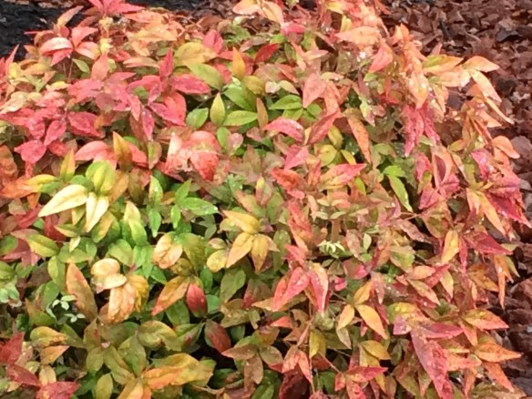 All sorts of colors on one bush