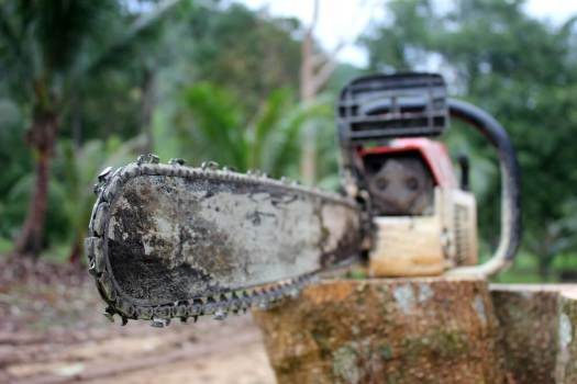 Remove stump with chainsaw