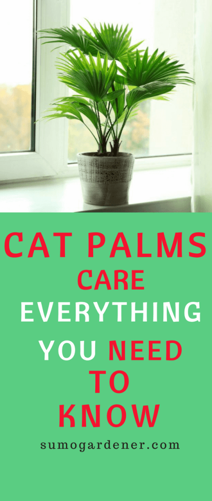 how to care for a cat palm
