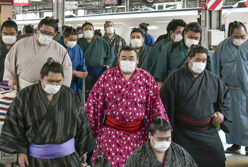 Sumo-Haru-Coronavirus