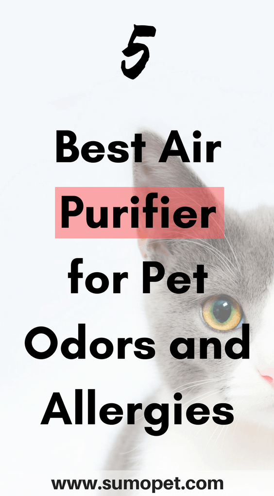 top 5 air purifier for pet odors and allergies