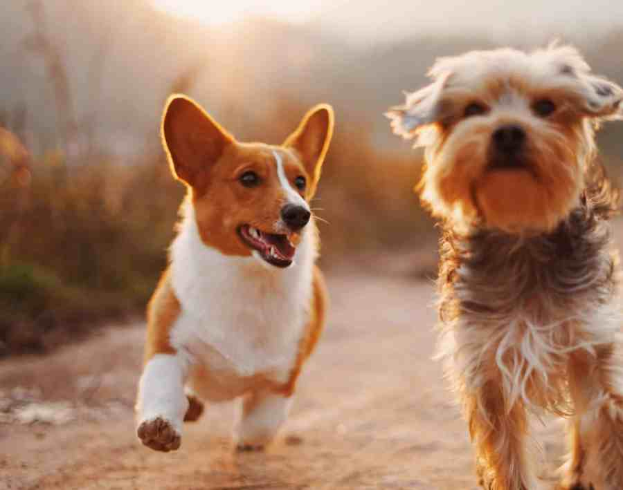 Essential Tips For the First-Time Dog Owners