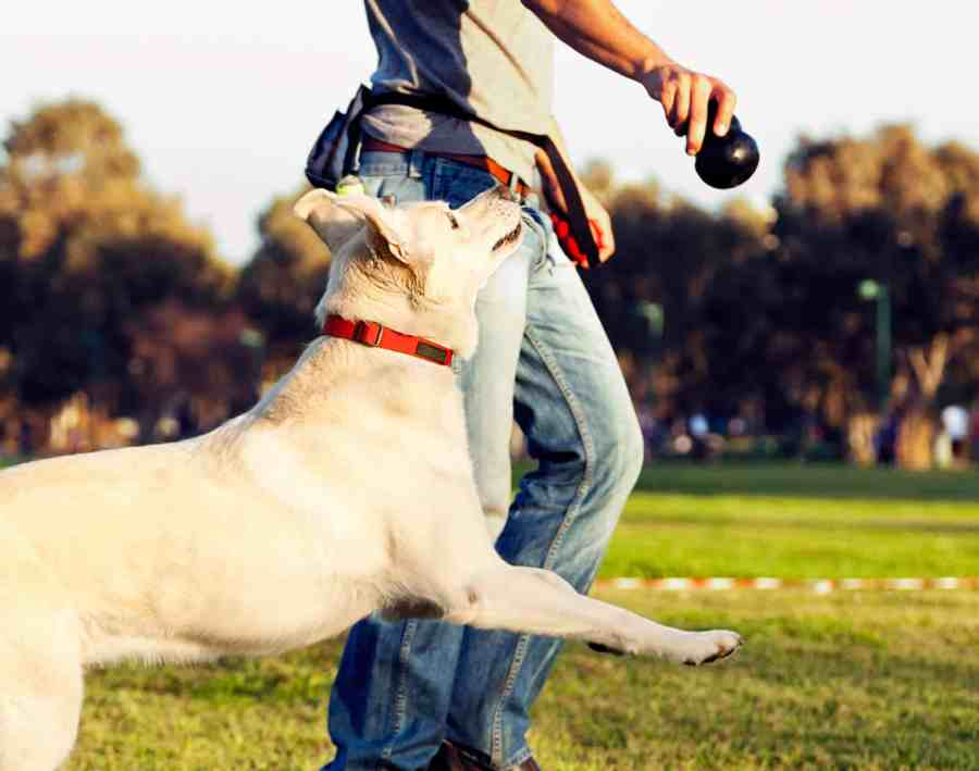 Simple Dog Walking Tips Every Dog Owner Should Know
