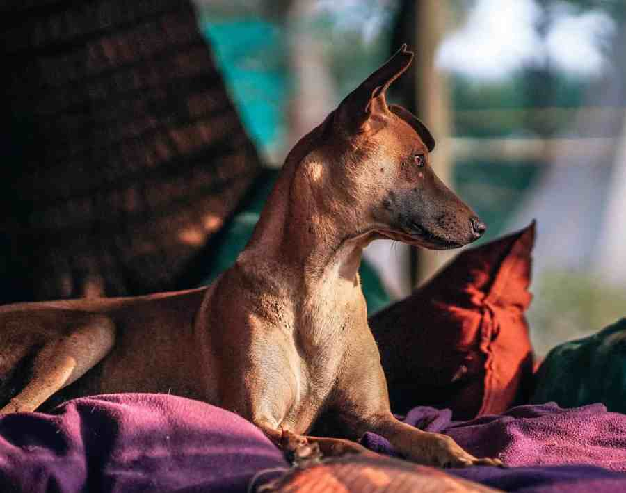 Pet-Friendly Hotel Etiquette: How to Stay in Hotels with Animals