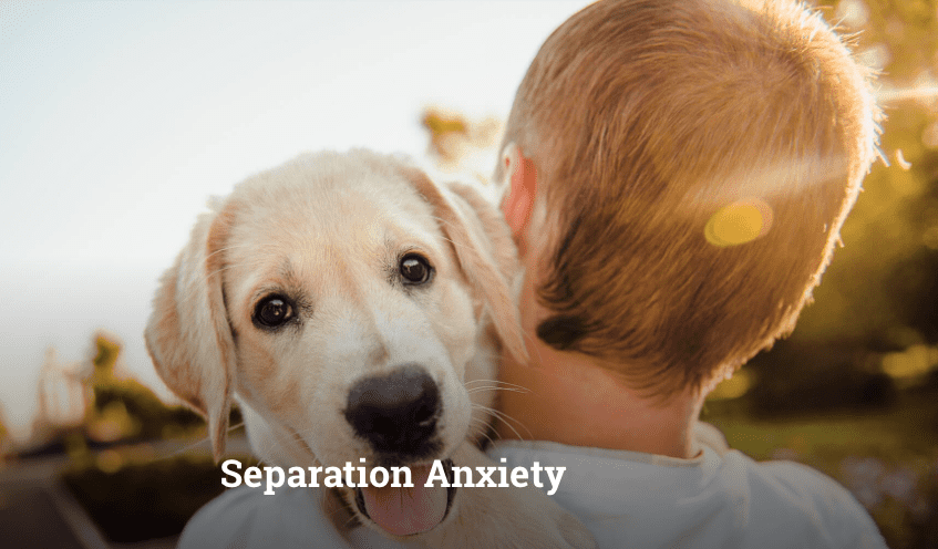 separation-anxiety