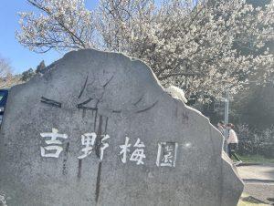 【大分市 吉野梅園】県内有数の梅の花の名所!春のお出かけにピッタリのオススメスポット✨