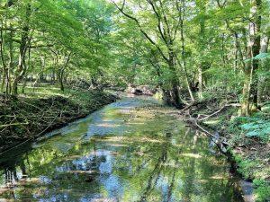 【由布市 男池湧水群】暑い夏にオススメ!美しく冷たい湧き水と生い茂る自然に森林浴リラックス✨