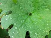 Water Droplet 06