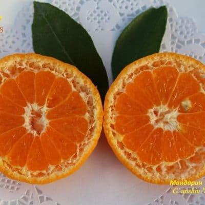 mandarinele te fac să pierzi în greutate pierdere în greutate timp de opt ani
