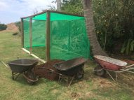Volivoli Beach Resort - Fiji Day 2018 - Mangroves (1)