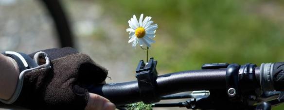 mountainbike med blomst