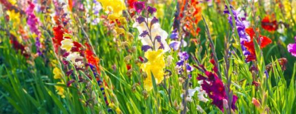 field flowers 2