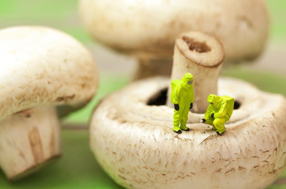 De spiselige planter gavner din sundhed
