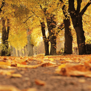 3 Must-Visit Fall Destinations