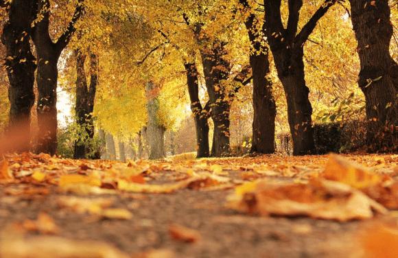 3 Must-Visit Fall Destinations