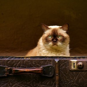 How I Pack My Fragile Items