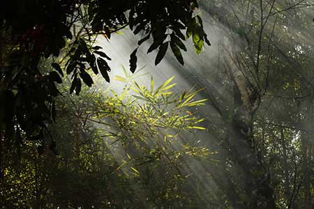 View from Sundara Mahal Garden The Yellow Bamboo Cluster