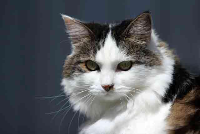 Cat---god