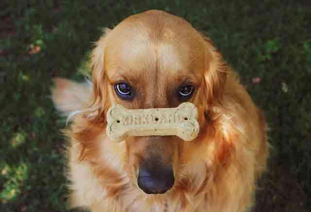Dog--Friend