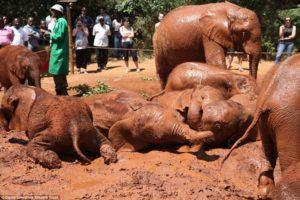 Nairobi Excursions - David Sheldrick Wildlife