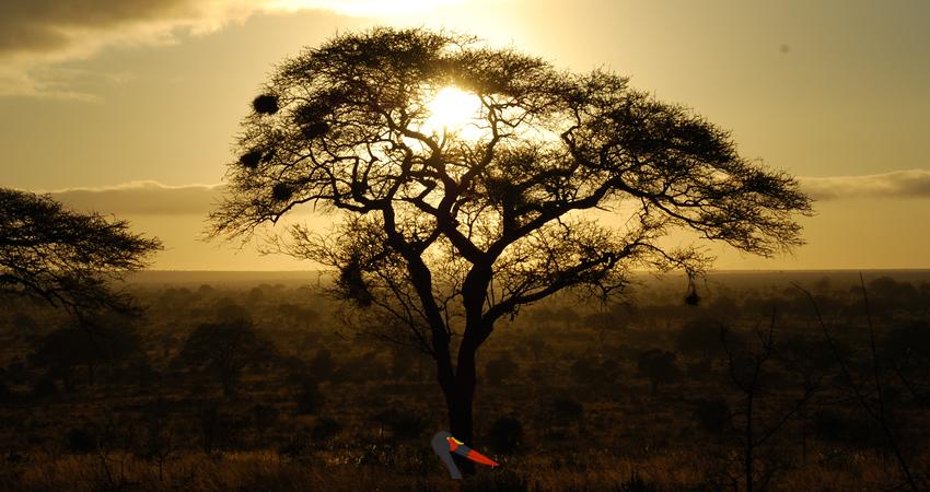 slide-african-savanah-tree