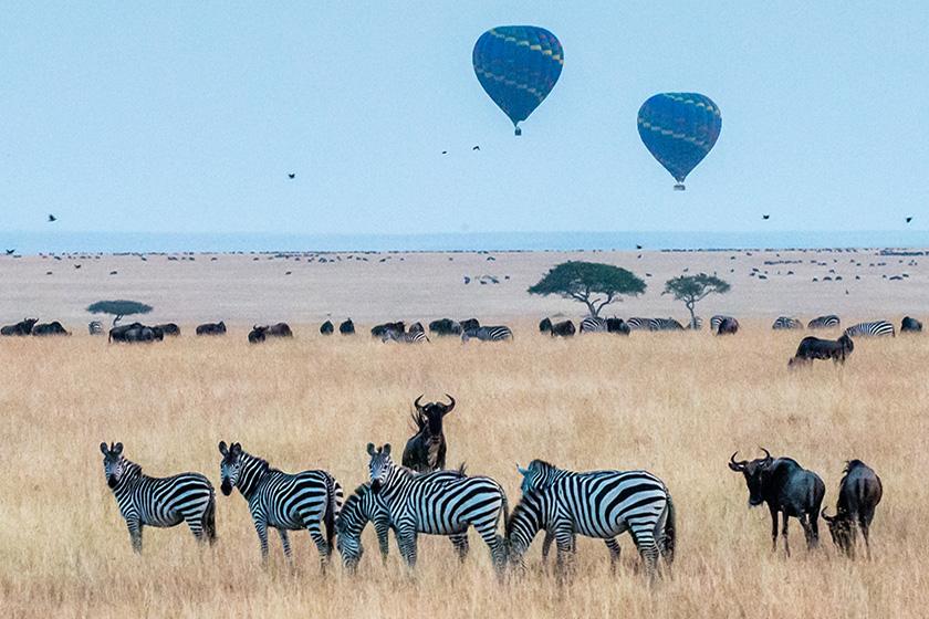 zebra-masai-mara-balloon-safari-sunday-best